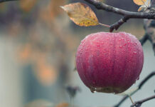 Dlaczego warto zdecydować się na skrzyniopalety do transportu jabłek